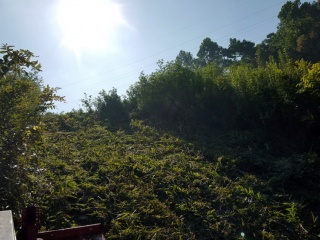 landclearing_090721-small